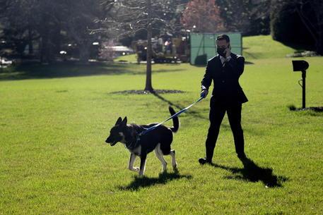 Usa: nuovi guai per Major, il cane di Biden morde ancora