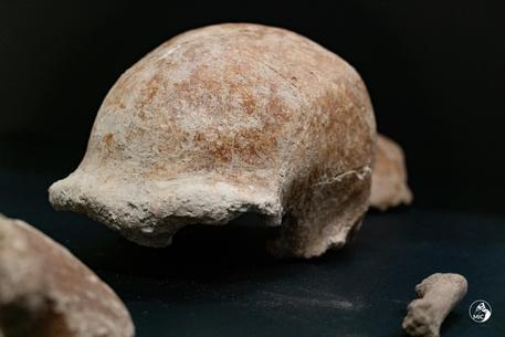 Una delle calotte craniche ritrovate nella Grotta Guattari a San Felice Circeo (Latina) © ANSA