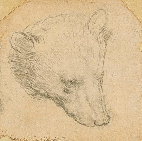 Testa di orso di Leonardo all'incanto per 9-13 milioni thumbnail