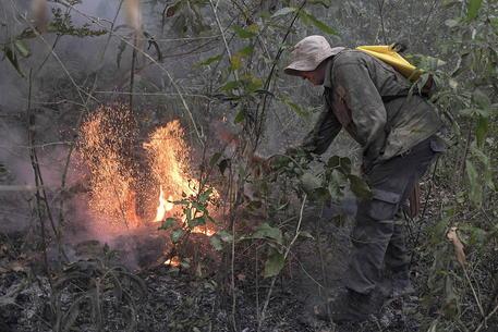 Amazzonia: ong, a maggio deforestazione aumentata del 70%