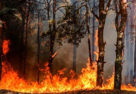 Incendio a Portella della Ginestra, luogo strage del '47 - Cronaca