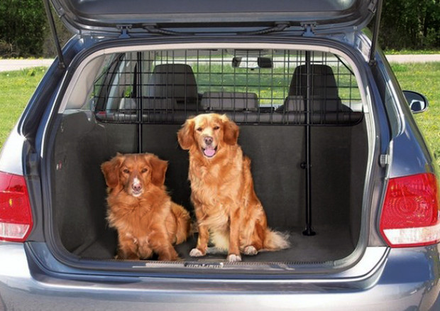 Viaggi In Auto Con Cani E Gatti Cosa Si Deve Sapere Vacanze