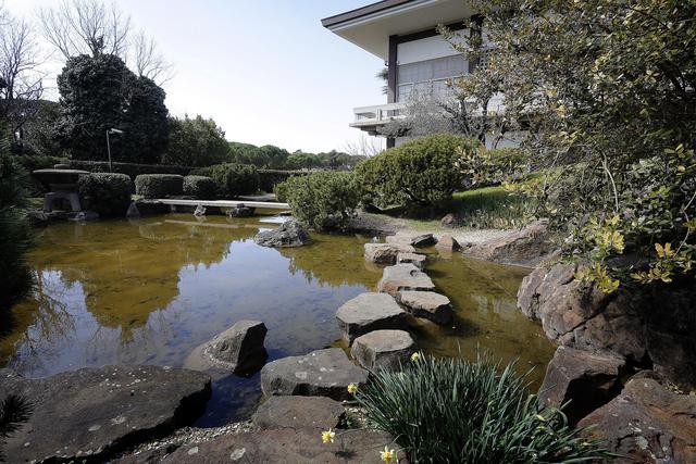 Roma ciliegi in fiore al giardino giapponese dell istituto di