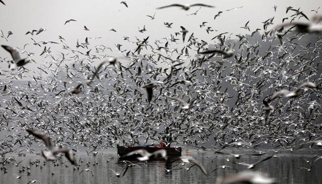 Migratory birds in India © Ansa