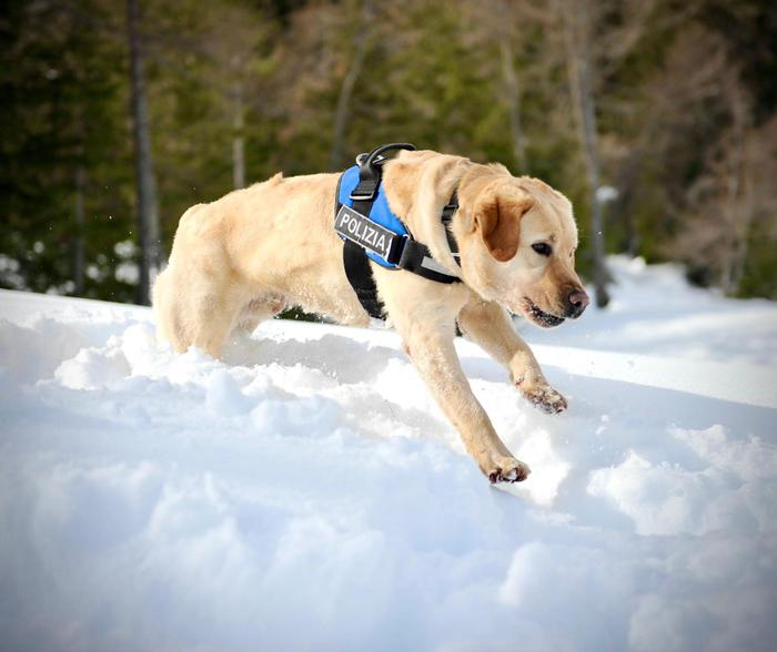 Weird Italy 49fd741c76586c1d82ba7bf2ec6f6a42 Bomb sniffer dog sweeps Cortina ski worlds site What happened in Italy today