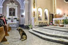 Dog who honored his deceased owner dies near Brindisi
