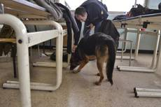 Cani antidroga a scuola, trovate dosi